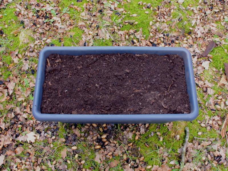 3. Blumen- oder Pflanzenerde (ca. 2 cm Rand zum Gießen lassen)