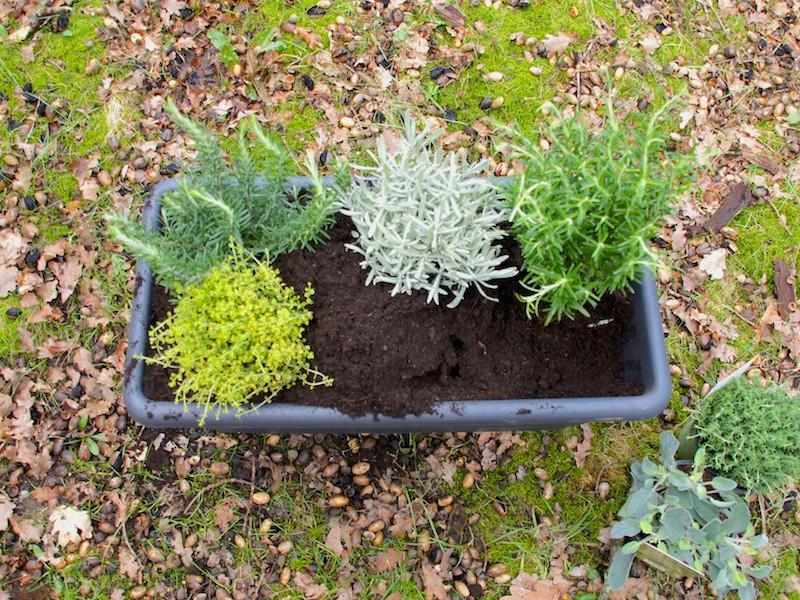 4. Bepflanzen
