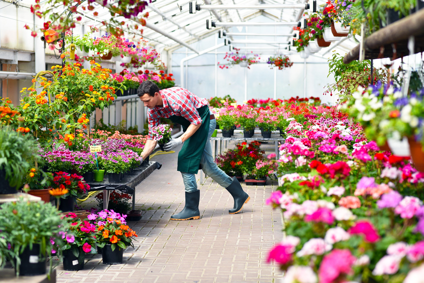 Blumenläden, Floristik