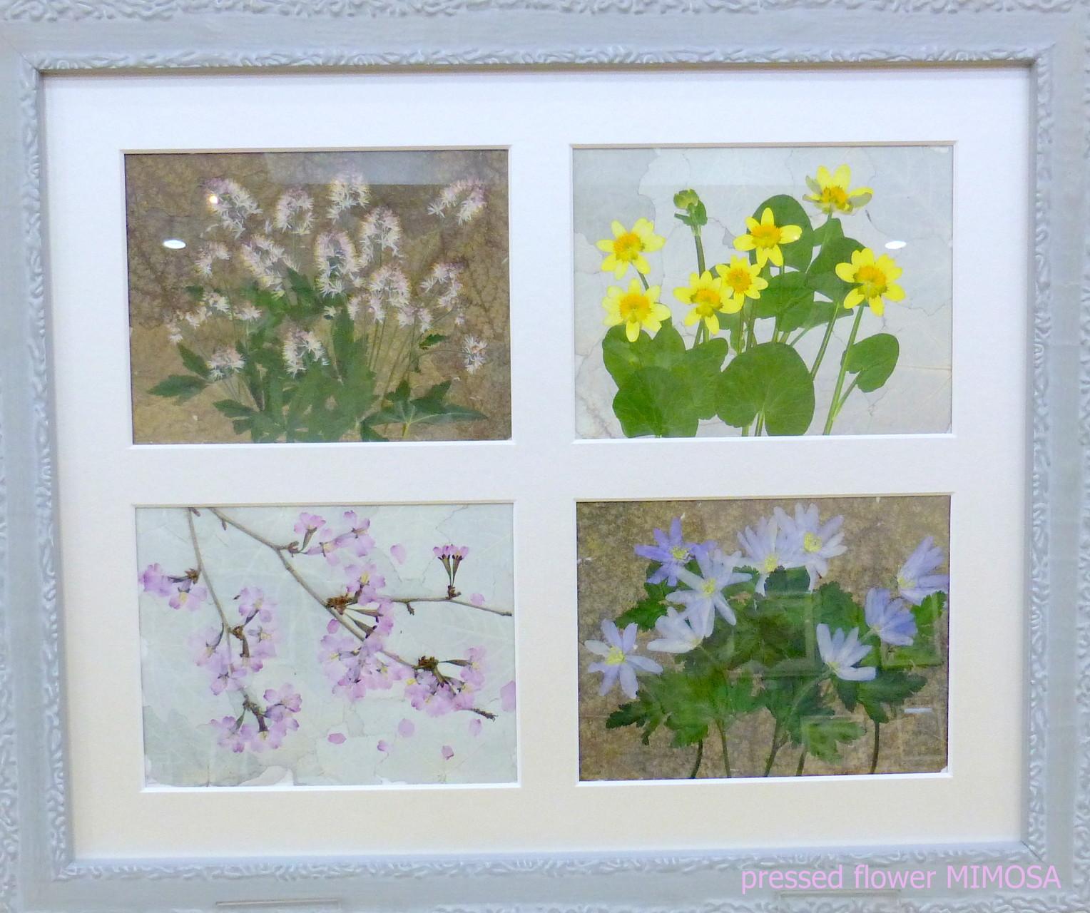 「春来たる」 花材:キクザキイチゲ