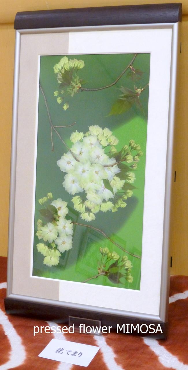 「花てまり」 花材:ウコンザクラ 、組み合わせ:着物地