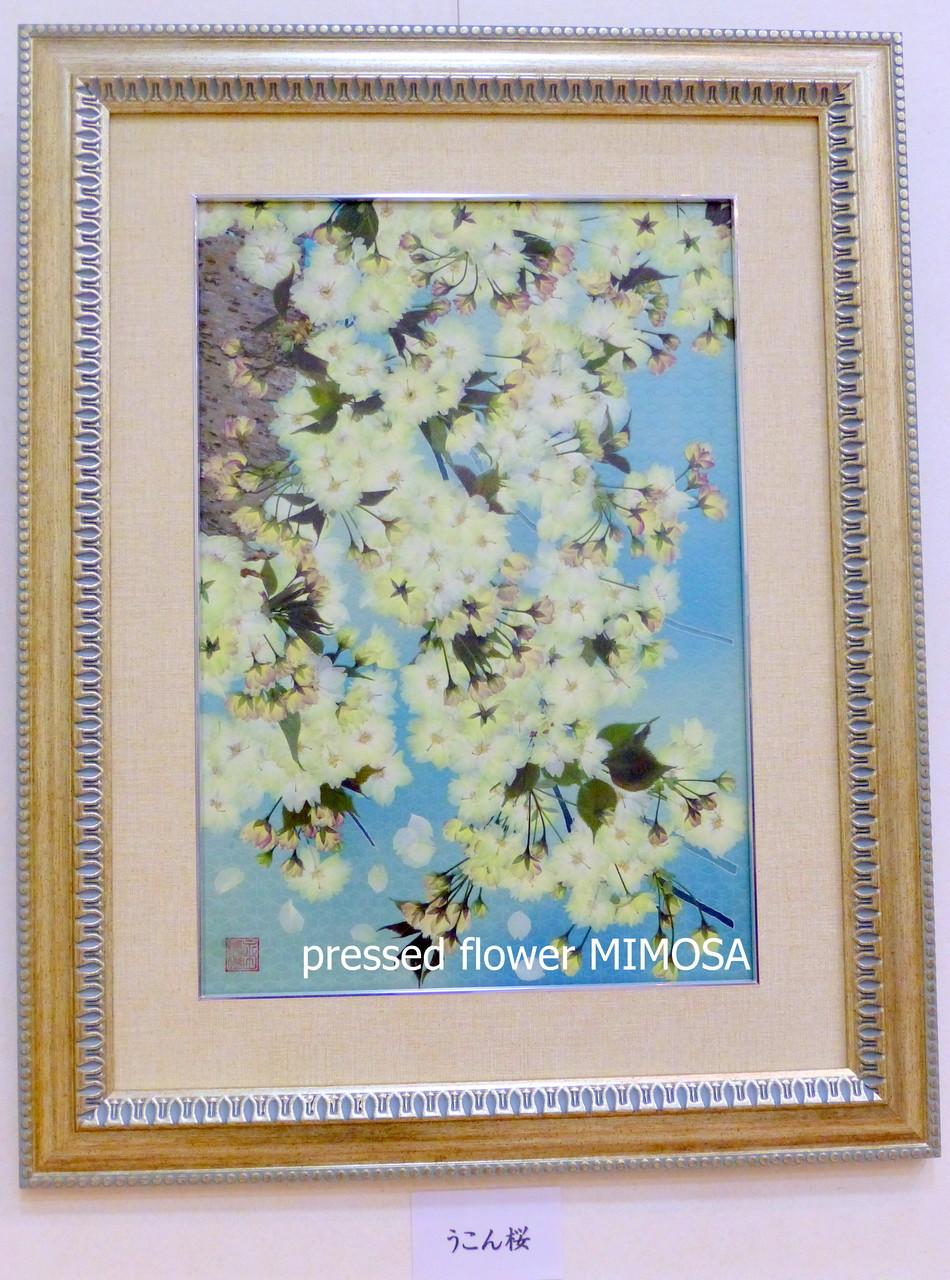 「うこん桜」 花材:ウコンザクラ 、組み合わせ:着物地