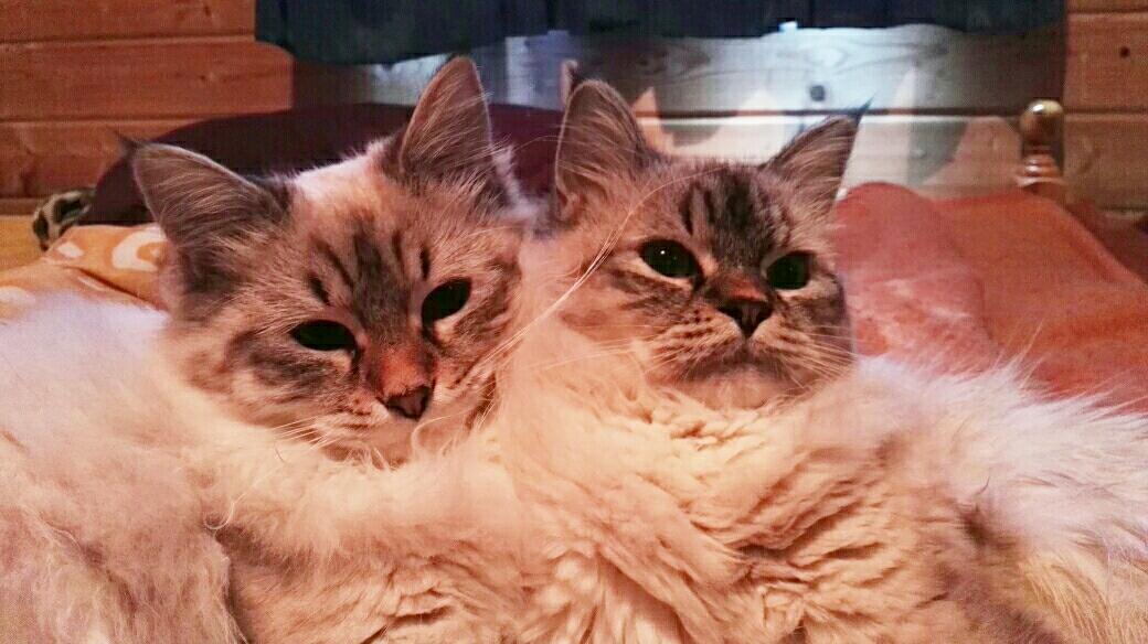 Mes 2 poupées russes: Olivia et Ornella Maris Stella