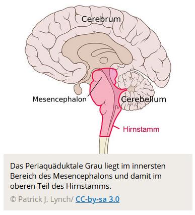 Kaum zu glauben: Gehirnregion für Religiosität entdeckt?