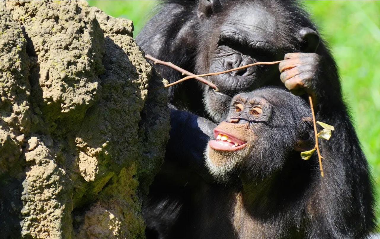 Was Mensch und Affe wirklich unterscheidet
