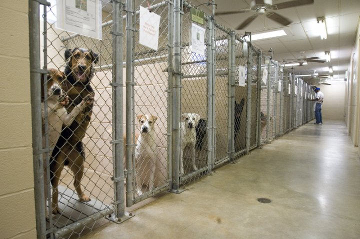 WI  Act 233 Enacted 3/1/2016:  Seized & stray animals in shelter