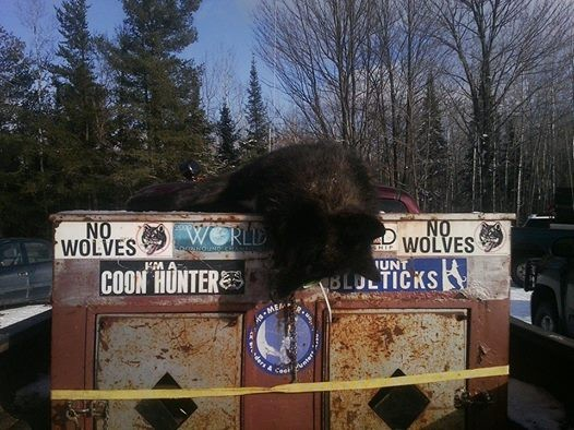 Hound dog truck with dead wolf: Wisconsin Wolf Hunting Facebook - 12/4/2014 (Zone 3)