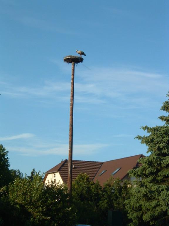 Storchennest auf unserer Ferienanlage
