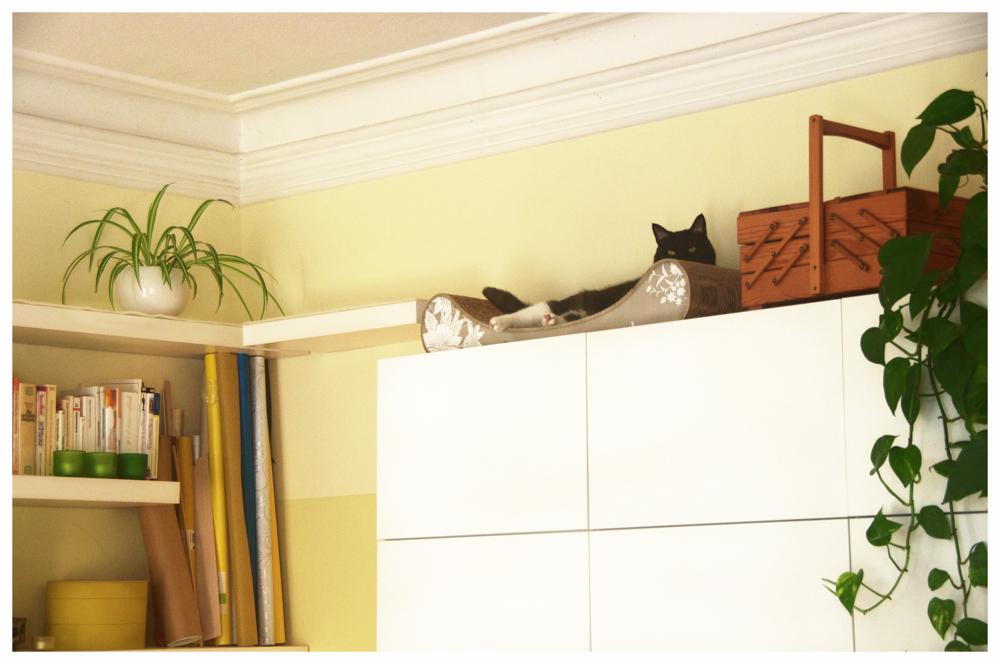 Schlafplatz für Katze auf dem Schrank Cat-on einrichten gestalten Idee