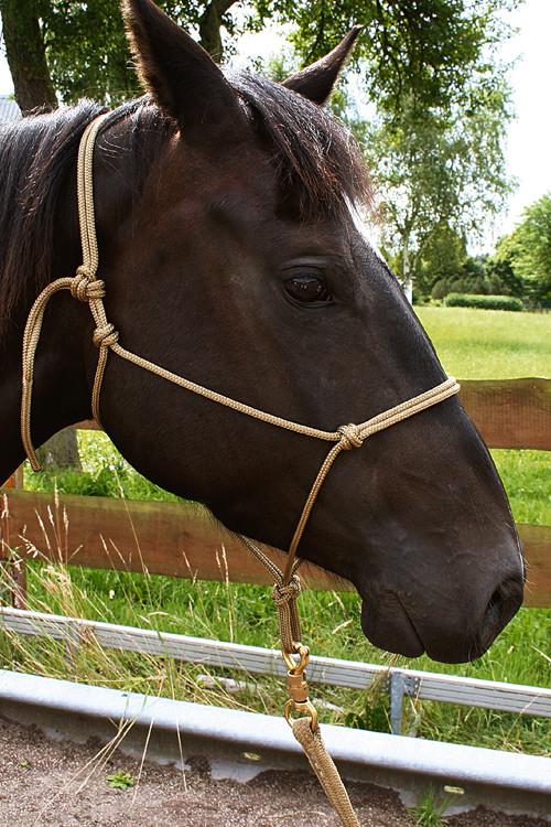 Horsemanship Shop Brockamp Knotenhalfter Warmblut