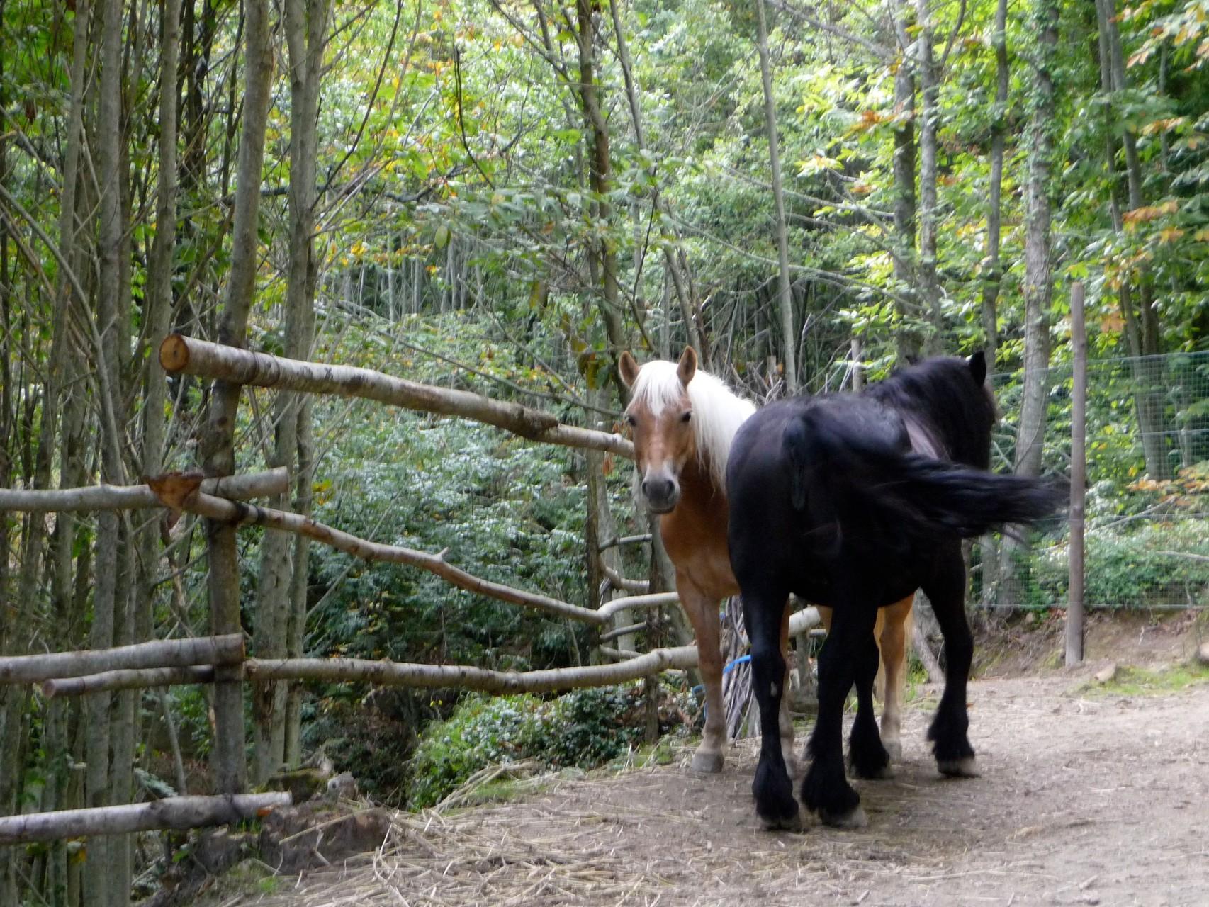 Wer oft hochmuss, ist auf Pferde angewiesen.