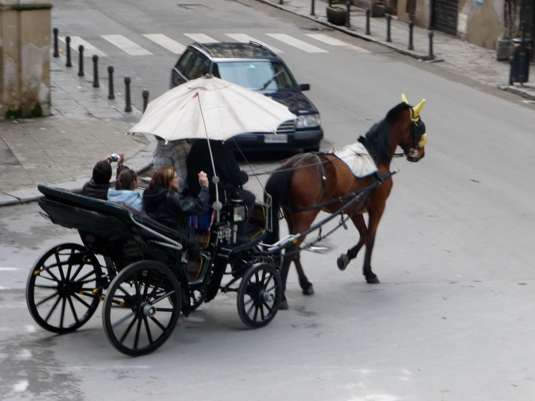 Kutschfahrten finden in Palermo nur zum Vergnügen der Touristen statt.