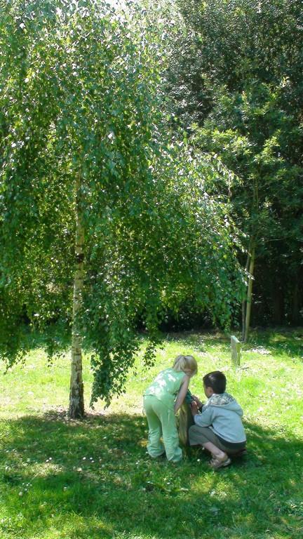 Arboretum de Carnivet (Quessoy). I. Rondel OT Pays de Moncontour