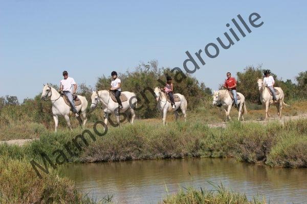 Balade à cheval Camargue