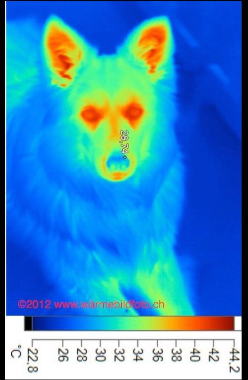 Tieren mit Wärmebildfoto helfen
