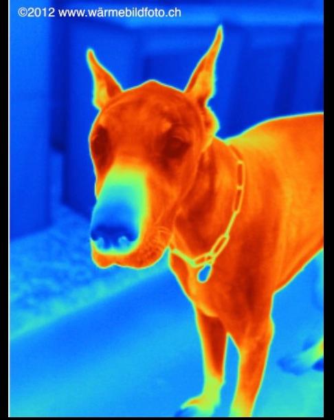 Thermografie für Tiere