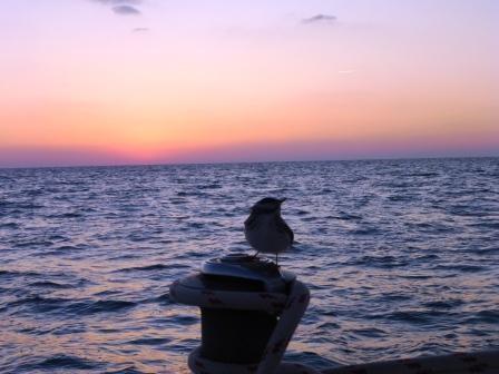 Sonnenuntergang mit unserem Bootsvogel Pepina