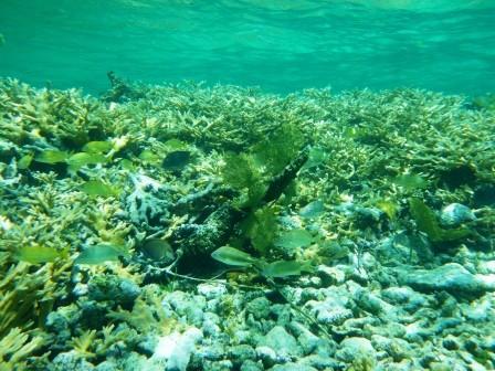 Korallenrif