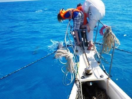 Delfine bei Boot