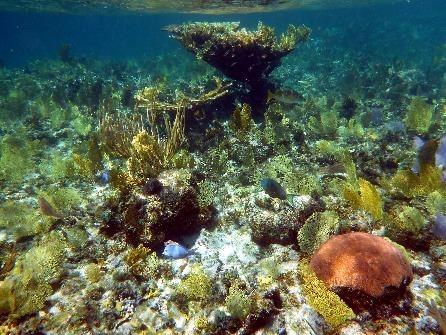 Unterwasserwelt Karibik
