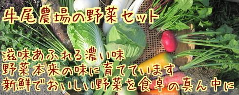 滋味あふれる濃い味、野菜本来の味に育てています新鮮でおいしい野菜を食卓の真ん中に