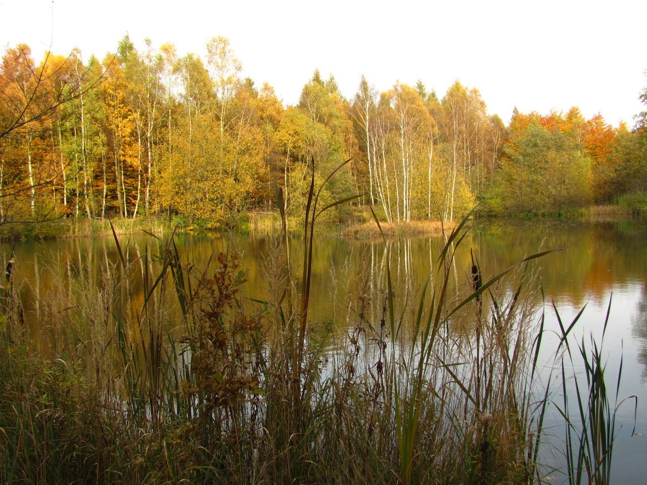 Moorlandschaft (© Claus Lampe)