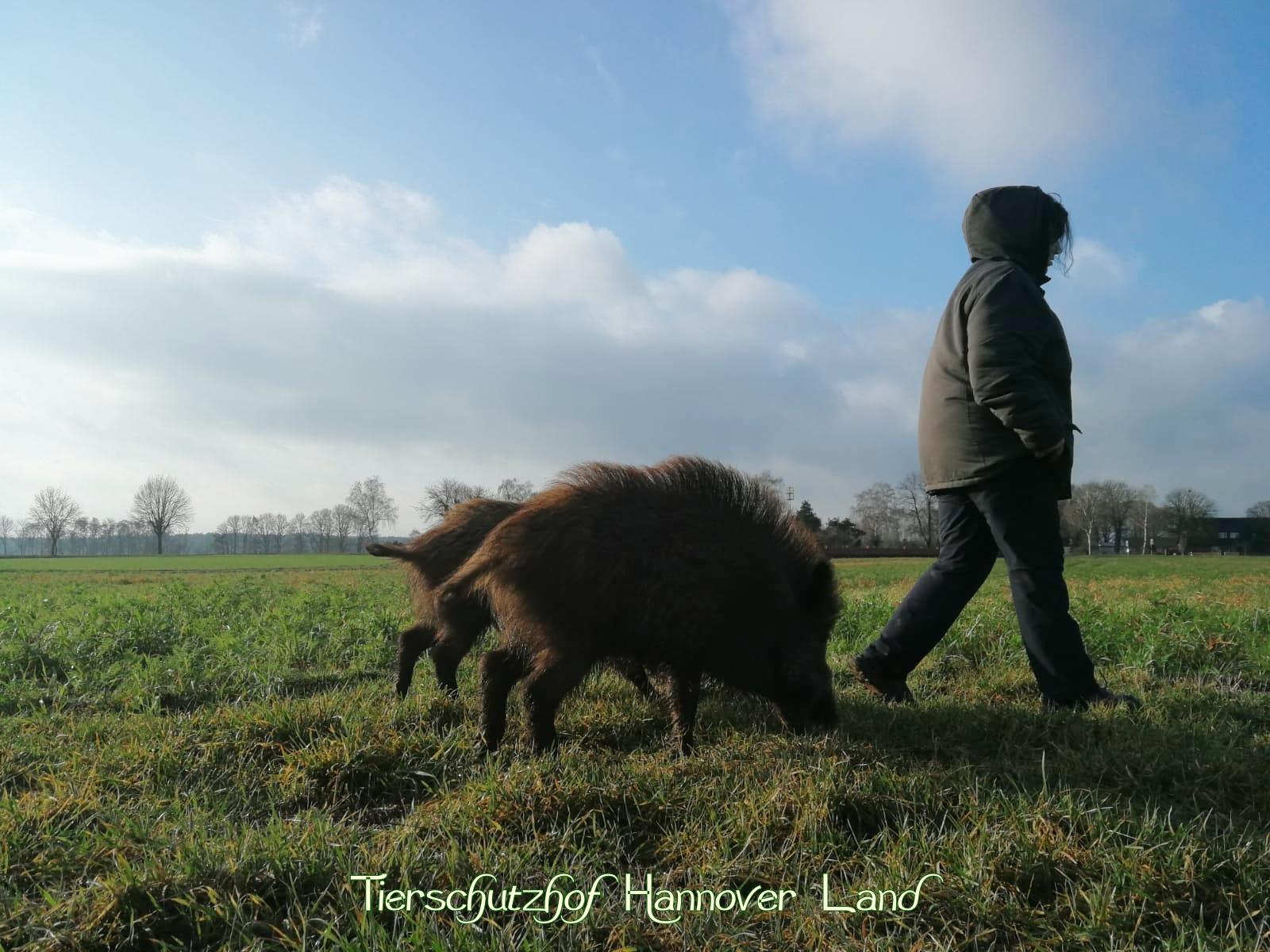 Ausflug über die Felder