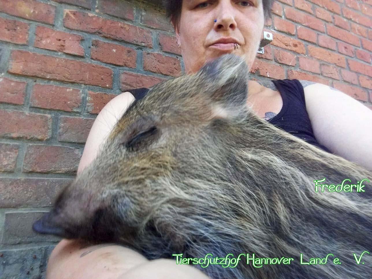 Frederik, das Schoßschweinchen