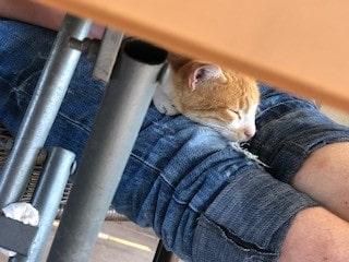 Katzen in Izmir