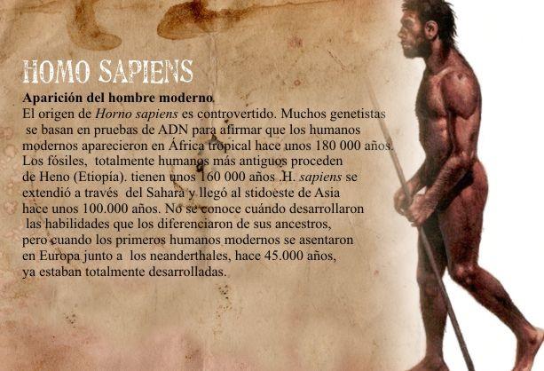 Q Significa Neanderthal El recorrido del Homo ...