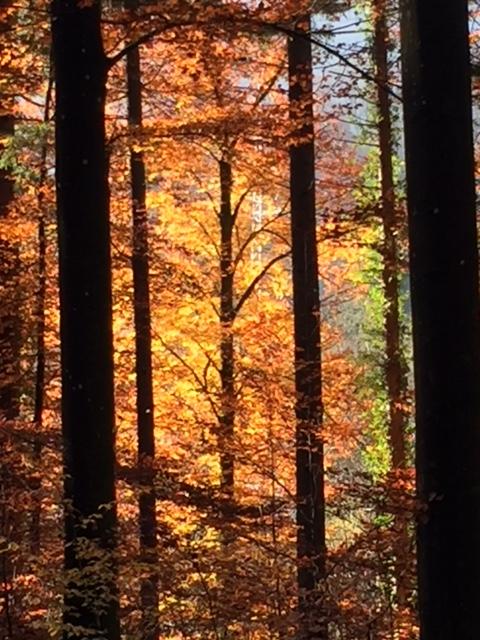 Der Herbst in Gold- und Kupfertönen