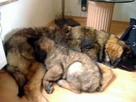 Fritz mit 6 Monaten, Elly mit 8 Wochen