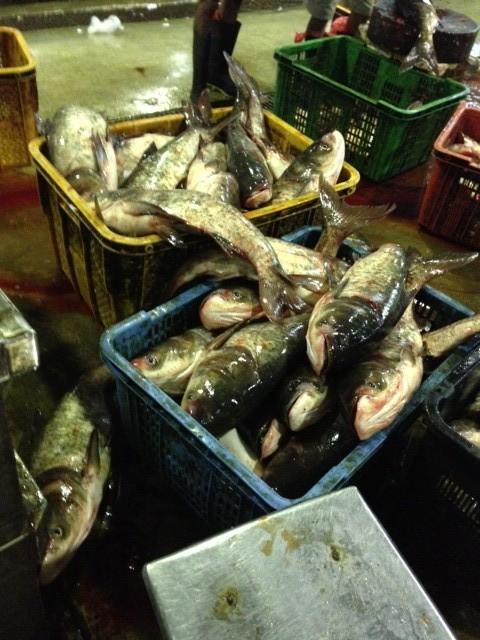たくさんのお魚がアジアで消費されています