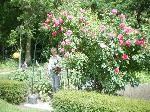 """Le potager et son rosier """"Gîte de France"""" - Gîte la Fontaine St Gervais - Aumont - Oise"""