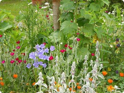 Fleurs de juin 2014 - jardin du gîte la Fontaine St Gervais - Aumont - Oise