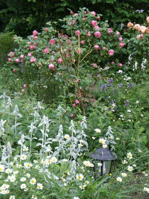 Rosiers - jardin du gîte la Fontaine St Gervais - Amont - Oise