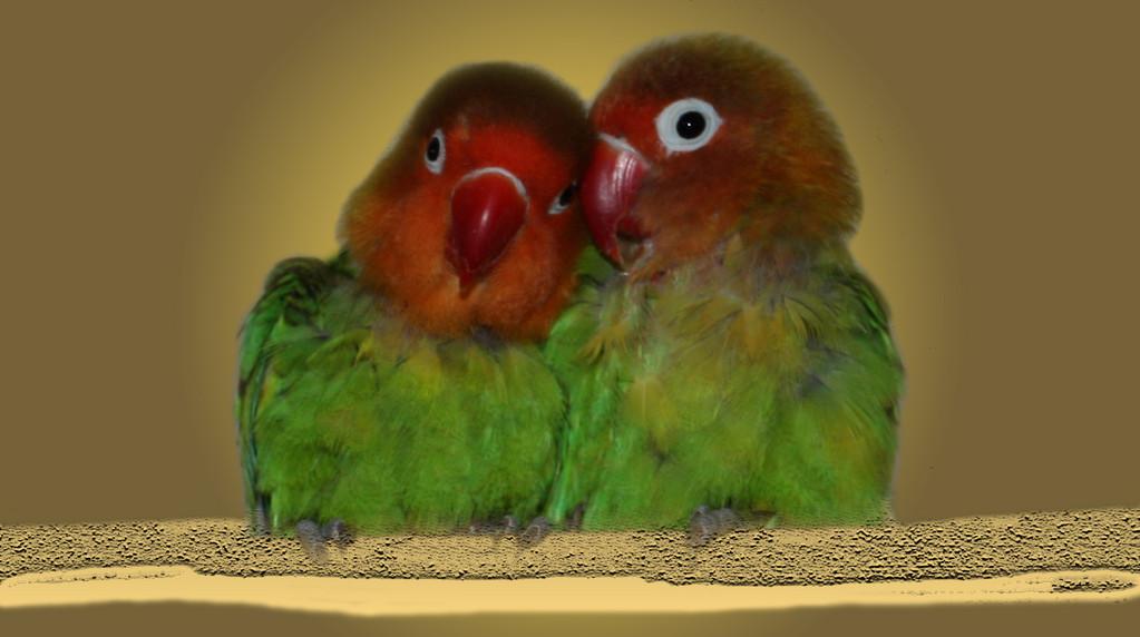 Pitti und Susi