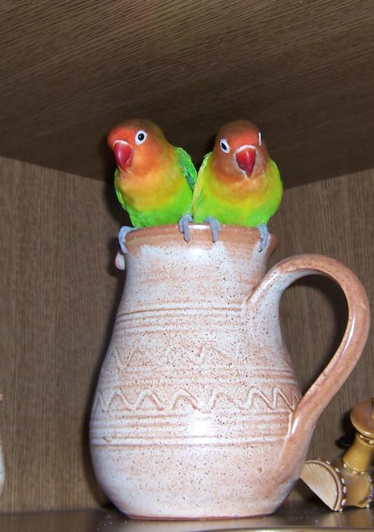 Auch ein Nest?