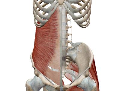 「腹横筋」の画像検索結果