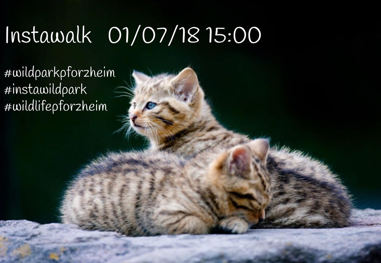 Katzenfoto: So bewarben der Wildpark und der Förderverein auf Instagram den ersten Instawalk. Quelle: Markus Zindl
