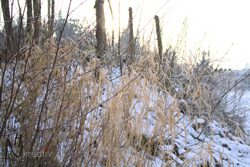 Gras im Winter