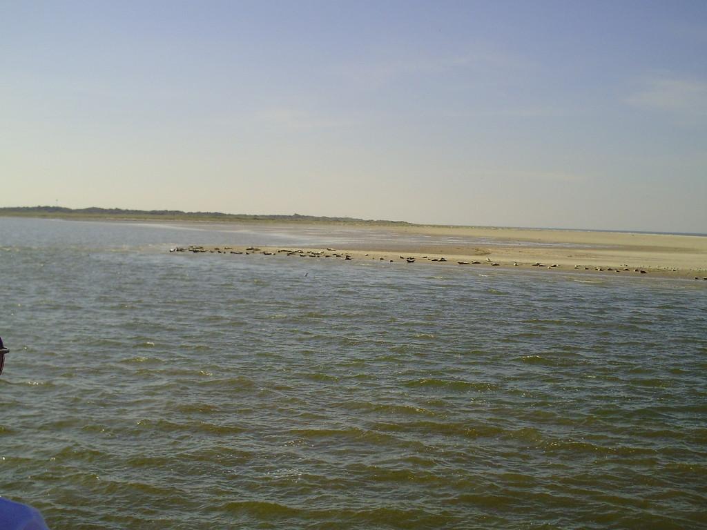 ... die Seehundsbänke bei Langeoog