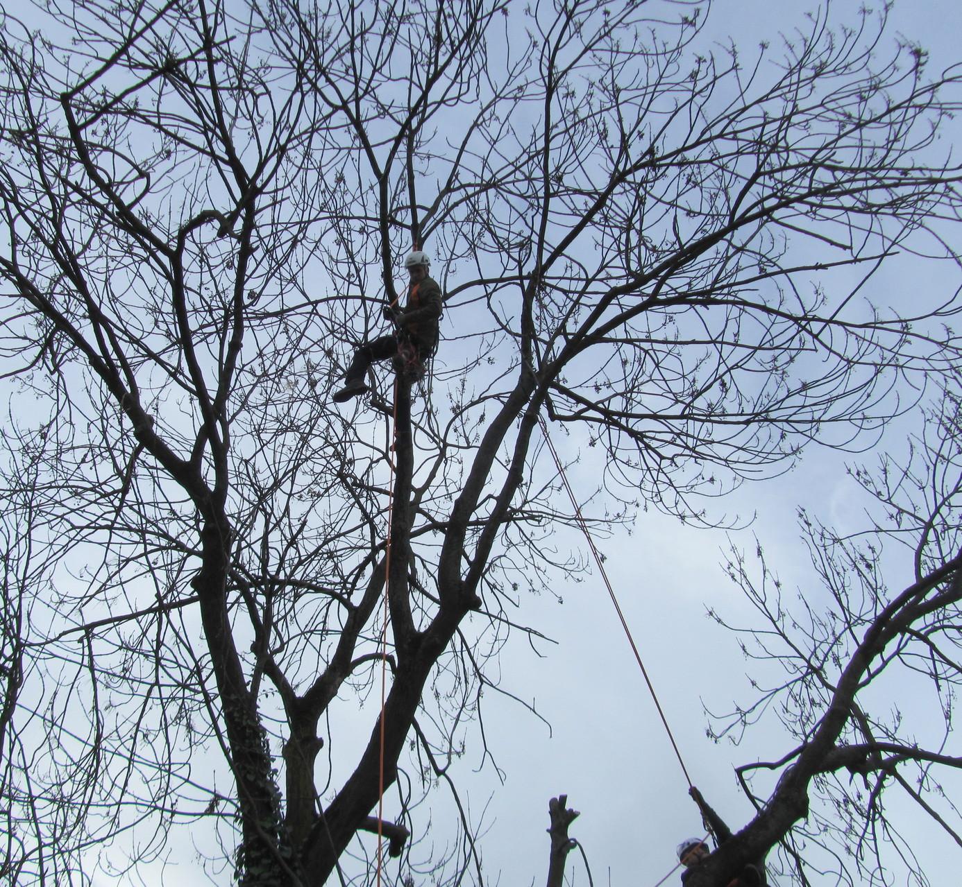 Vogelnestumsetzung für den Artenschutz