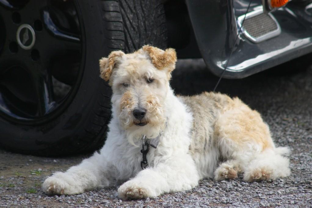 Sammy , unser Wachhund aus dem Hause : Fox aus Stein des Anstosses!