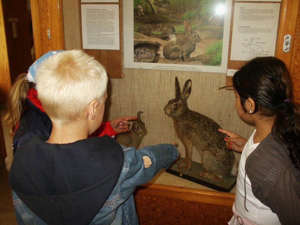 Wald- und Moormuseum Berumerfehn