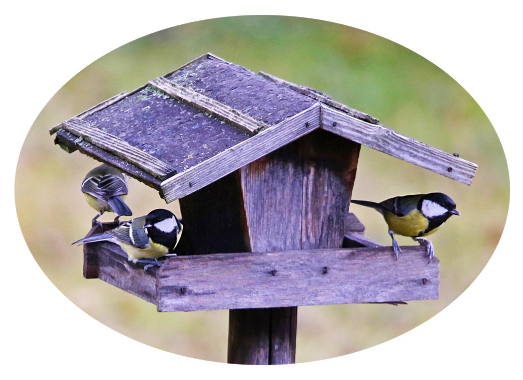 8. bis 10. Jänner 2021: Stunde der Wintervögel