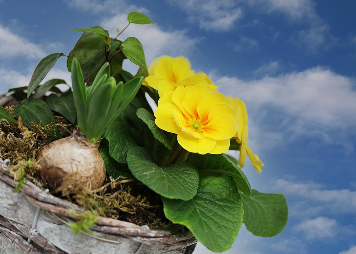 Ein bisserl Frühling ...