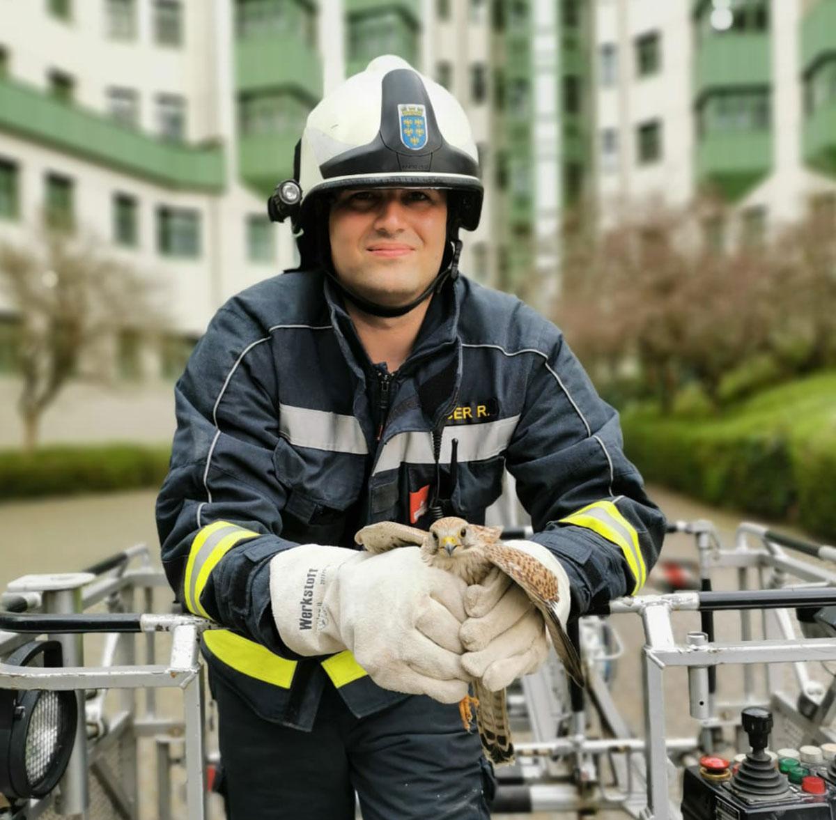 Feuerwehr rettet Jungfalken