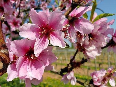 Le printemps est là, retrouvons notre légèreté