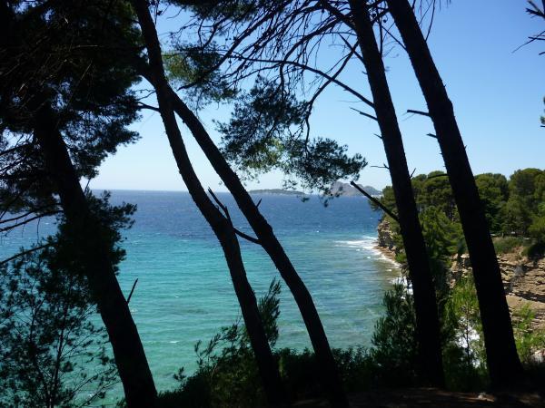 Les pins surplombent la crique, au loin l'île verte